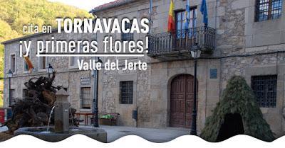 Cerezo en Flor Valle del Jerte Tornavacas