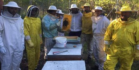 El sector de la apicultura en León ha experimentado un gran crecimiento en los últimos años. DL -