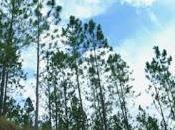 Medio Ambiente ejecuta segundo Inventario Nacional Forestal