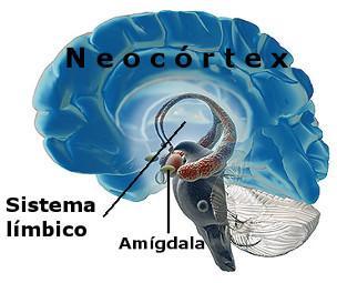 El secuestro de la amígdala