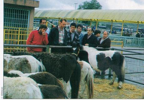 Fotos del mercado de Ganados de Talavera de la Reina (III)