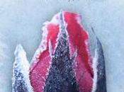 Sangre hielo (Sangre hielo, Elly Blake