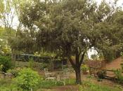 grandullones jardín: árboles. Algunos tardan despertarse.