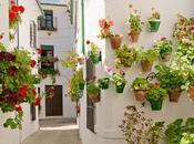 Priego Córdoba: visita llena flores