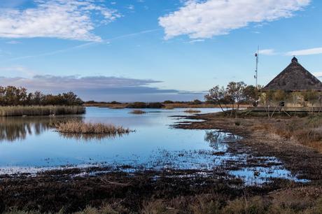 Pinos, dunas y cámaras en Doñana