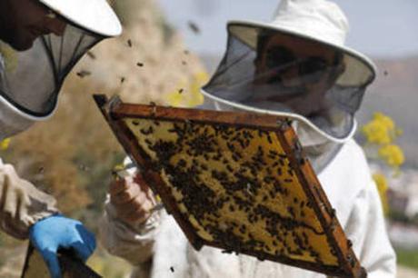 Miguel Fernández y Joaquín Martínez visitan el colmenar del apicultor santomerano. /Edu Botella / AGM