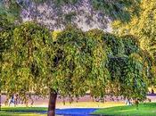 Naturaleza: Árbol
