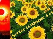 GANADOR SORTEO TRAGEDIA GIRASOL (Benito Olmo)