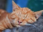importancia descanso nocturno