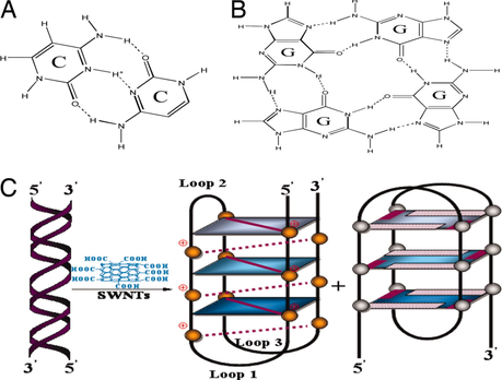 Una Nueva Estructura De La Molécula De La Vida Adn Paperblog