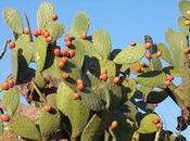 Nopal Cactus, Beneficios Medicinales
