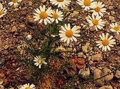 neixin flors cada instant...