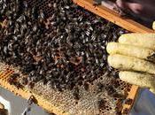proyecto impulsa apicultura agricultura espacios protegidos