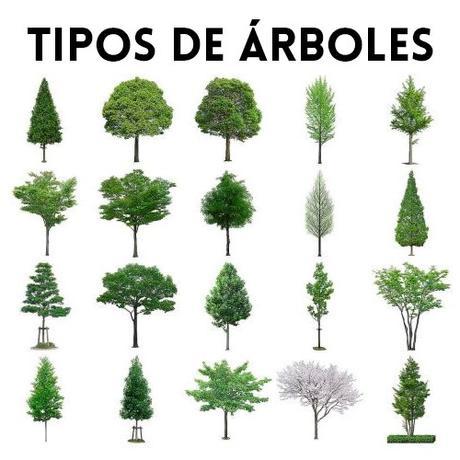 Tipos de Árboles - Paperblog