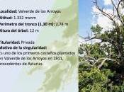 Arboles singulares Sierra Norte Guadalajara