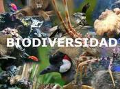 Internacional Biodiversidad