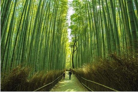 Bosque bambú Arashiyama Kioto esta