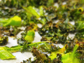 Kale chips curry