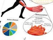 ¿Eje intestino-músculo?