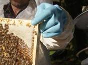 Alemania auge apicultura urbana