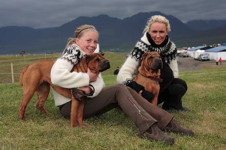 Islandia y los perros: La prohibición de 1924
