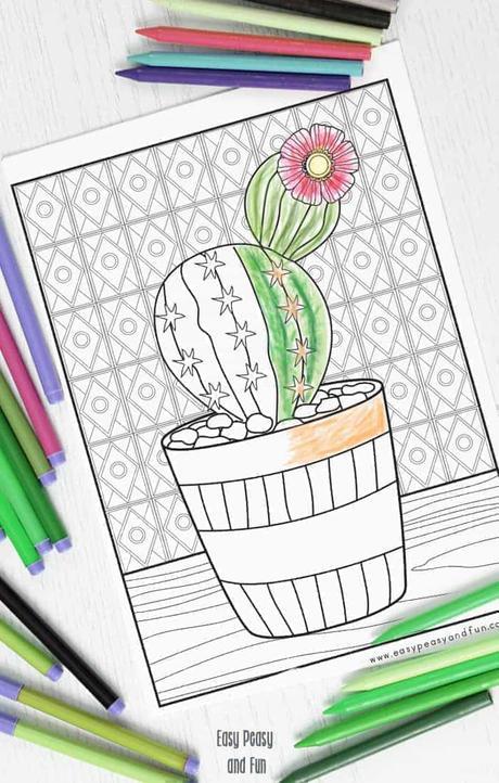 5 mejores ideas con  Cactus y Suculentas