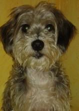 Dia del perro sin raza