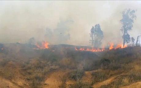 Piroterrorismo: así quedó la Reserva Natural Crater Be'eri  tras ser incendiada por terroristas palestinos.