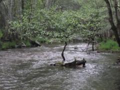 Una tarde de este mayo en la ribera del Jarama …