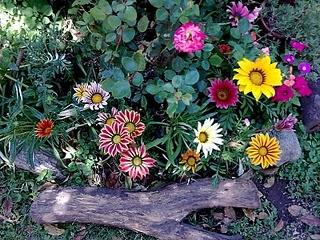 Algunas plantas de mi jard n paperblog for Plantas para mi jardin
