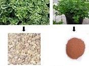 Aceites esenciales para pieles secas.