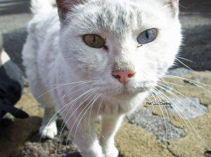 Leucemia e inmunodeficiencia felina¡