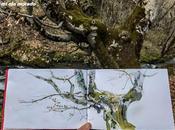 Plein Sierra Demanda