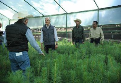 REALIZA GOBERNADOR GIRA DE TRABAJO EN MUNICIPIOS CON PRODUCCIÓN FORESTAL E INDUSTRIA MADERERA
