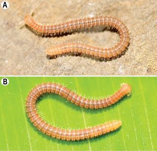 Nuevas especies en cuevas de Birmania