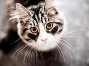 poder mágico gatos