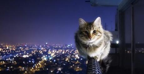 El poder mágico de los gatos