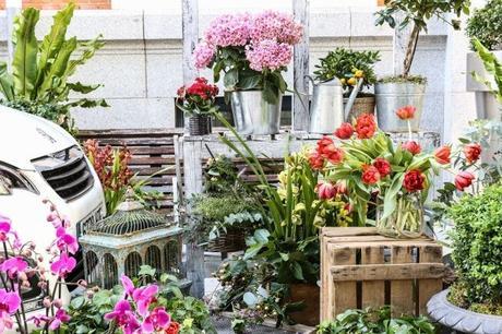 AYUDA-PARA-INICIAR-UN-PEQUEÑO-NEGOCIO AYUDA PARA INICIAR UN PEQUEÑO NEGOCIO: ¿Una floristería?