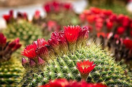 Conoce el vivero biotecnológico especializado en plantas xerofíticas que puedes visitar en Madrid