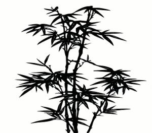 Curiosidades sobre el Bambú