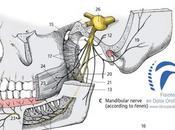Nervio trigémino. ¿qué nervio trigémino? Funciones entidades clínicas relacionadas.