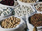mejores fuentes proteína vegetal