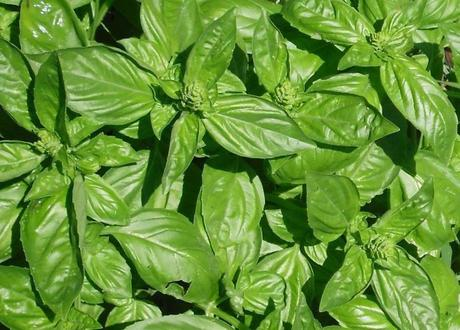 Remedios naturales para aliviar y prevenir las picaduras de mosquitos