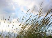 Cuento mes: viento ácido Arturo Sánchez