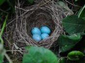 Oración gran poder pájaro macuá para suerte, dinero, riqueza, amor, Negocio