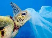 Contaminación Océanos: Causas, Consecuencias Soluciones
