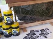 Quieren modificar para promover apicultura urbana