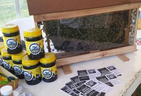 Quieren modificar la ley para promover la apicultura urbana