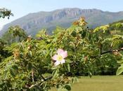 Ruta cascada Xiblu, silbido privilegiado Asturias