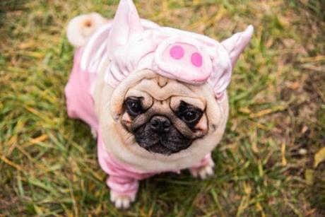 Ropa Para Pug